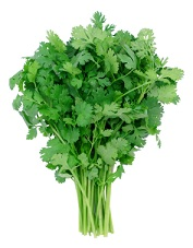 benefits-of-cilantro