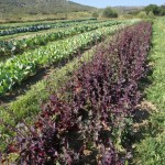 Acres-of-Organics-Rancho-La-Puerta