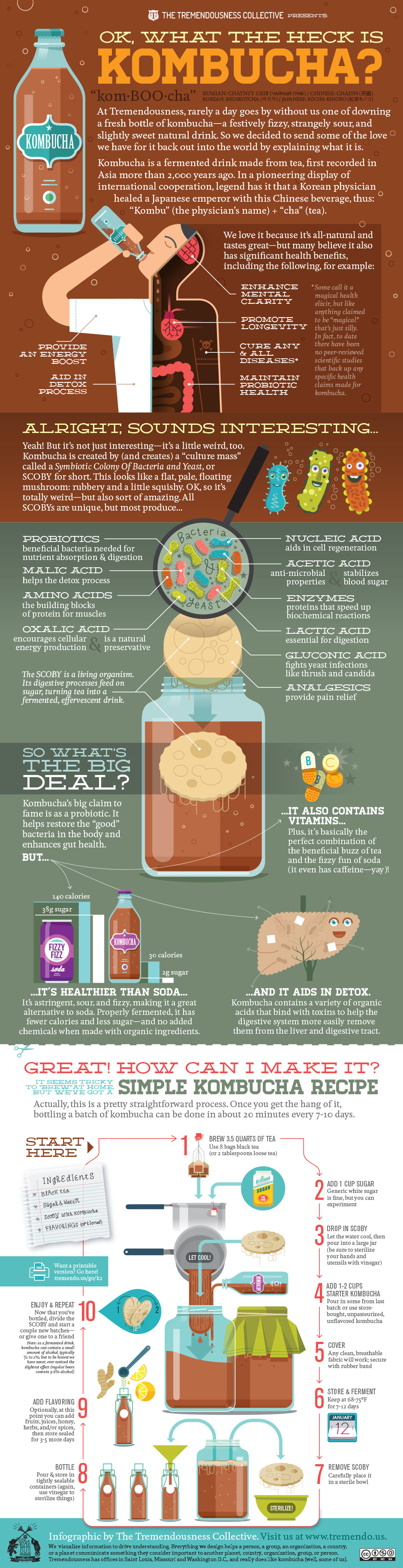 What is Kombucha Infographic