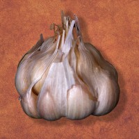 Garlic May Help You Lose Weight, Study Says