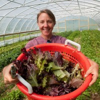 Organic gardening: How to grow an organic vegetable garden