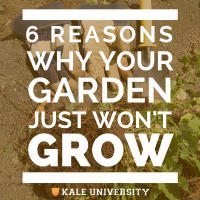 6 Reasons Why Your Garden Just Won't Grow
