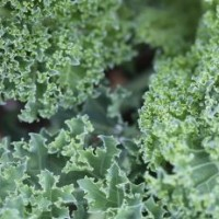 How to Grow Kale in a Container