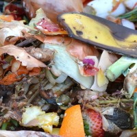 Reduce Food Waste, Help the Environment
