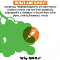 Label GMO's for Your Right to Know