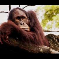 Do More Than Say No To Palm Oil